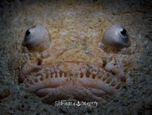 Siquijor diving - 20150410 P4100450 300x228 - Gallery