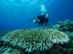 Siquijor diving - 20160328 P3280467 300x225 - Activities