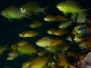Siquijor diving - 20150410 P4100352 300x225 - 20150410-P4100352