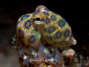 Siquijor diving - 20150410 P4100555 300x225 - 20150410-P4100555