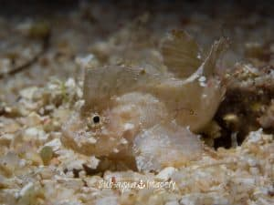 Siquijor diving - 20150410 P4100614 300x225 - Gallery