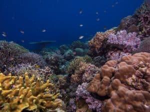 Siquijor diving - P2190321 300x225 - P2190321
