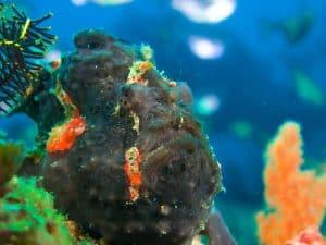 Siquijor diving - P3100118 300x225 - P3100118