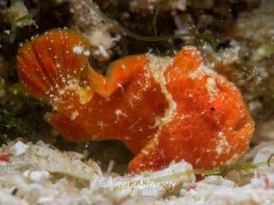 Siquijor diving - P3290342 300x225 - P3290342