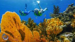 Siquijor diving - Snorkeling 300x169 - Snorkeling