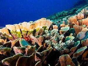 Siquijor diving - P2180146 300x225 -