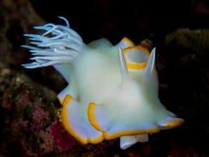 Siquijor diving - P2180211 300x225 -