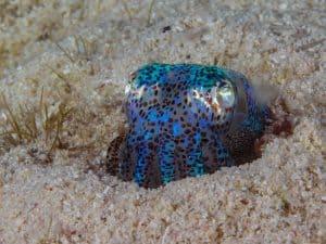 Siquijor diving - P3250554 300x225 -